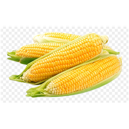 Sweet Corn Candy Piece (pack of 4)
